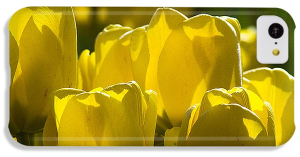 Yellow Tulips  IPhone 5c Case
