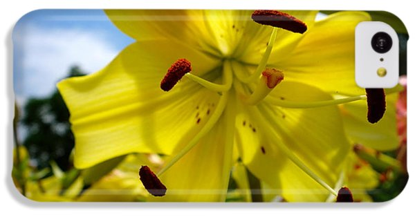 Yellow Whopper Lily 2 IPhone 5c Case by Jacqueline Athmann