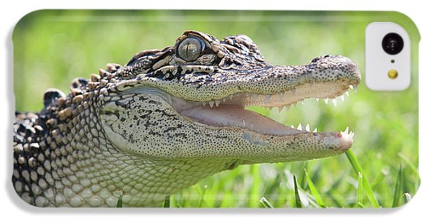 Young Alligator With Mouth Open IPhone 5c Case by Piperanne Worcester