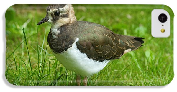 Lapwing iPhone 5c Case - Young Lapwing by Helmut Pieper