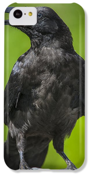 Young Raven IPhone 5c Case by Tim Grams