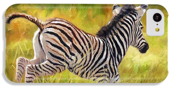 Young Zebra IPhone 5c Case by David Stribbling