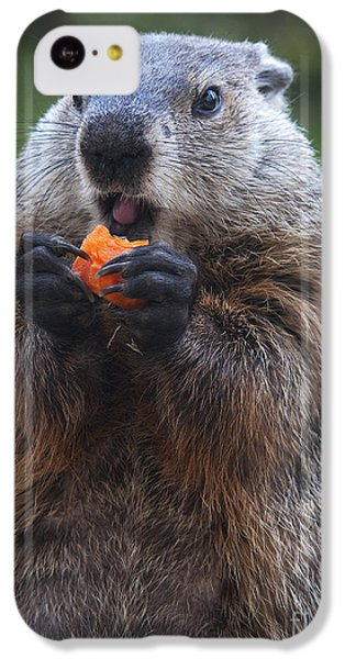 Yum-yum IPhone 5c Case by Paul W Faust -  Impressions of Light