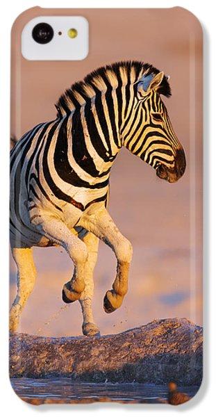 Zebra iPhone 5c Case - Zebras Jump From Waterhole by Johan Swanepoel