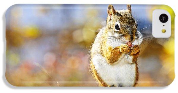 Red Squirrel IPhone 5c Case by Elena Elisseeva