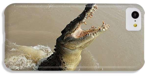 Salt Water Crocodile 2 IPhone 5c Case by Bob Christopher