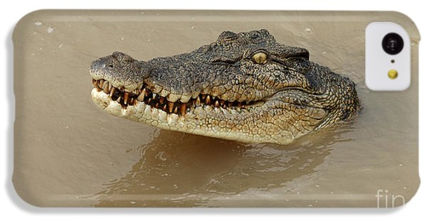 Salt Water Crocodile 3 IPhone 5c Case by Bob Christopher