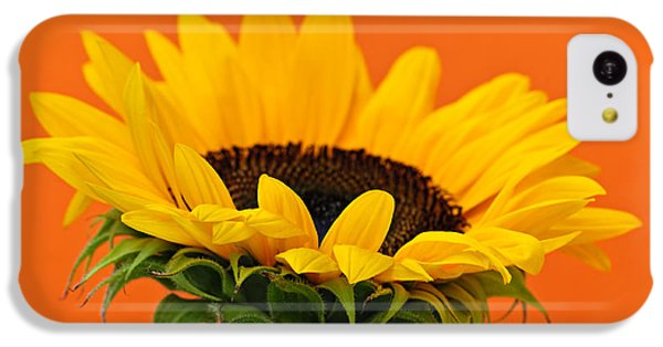 Sunflower iPhone 5c Case - Sunflower Closeup by Elena Elisseeva
