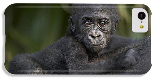 Western Lowland Gorilla Gorilla Gorilla IPhone 5c Case by San Diego Zoo