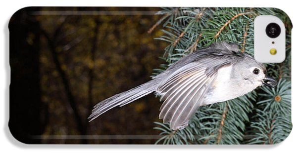 Tufted Titmouse In Flight IPhone 5c Case by Ted Kinsman