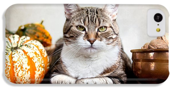 Cat And Pumpkins IPhone 5c Case
