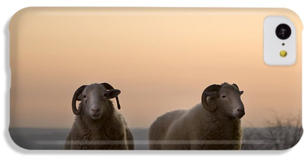 Sheep iPhone 5c Case - The Lamb by Angel Ciesniarska