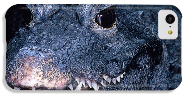 African Dwarf Crocodile IPhone 5c Case by Dante Fenolio
