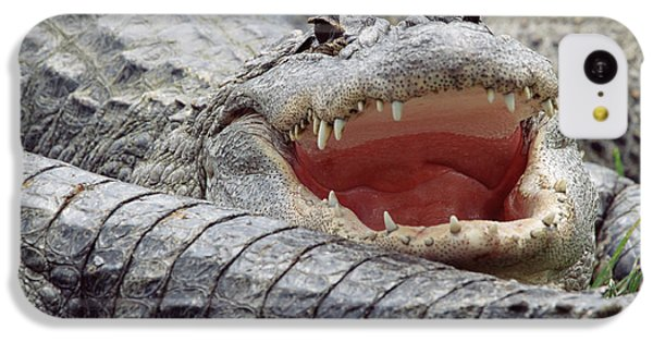 American Alligator Alligator IPhone 5c Case by Tim Fitzharris