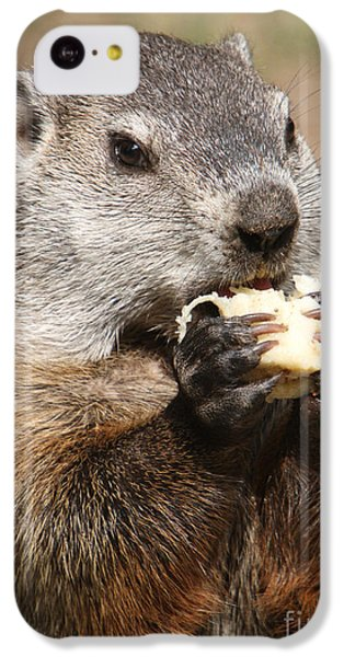 Animal - Woodchuck - Eating IPhone 5c Case by Paul Ward