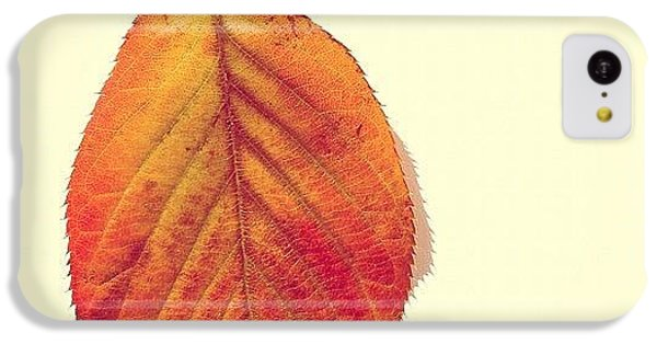 Autumn IPhone 5c Case