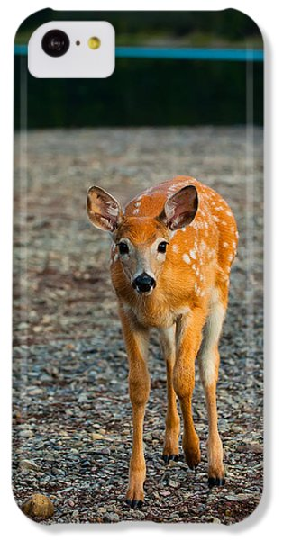 Bambi IPhone 5c Case by Sebastian Musial