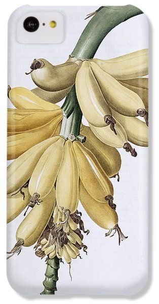 Banana IPhone 5c Case by Pierre Joseph Redoute