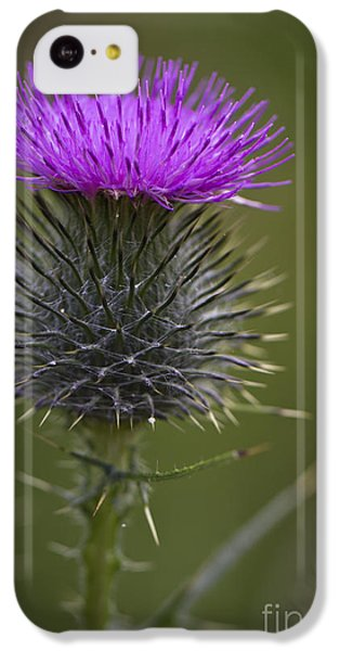 Blooming Thistle IPhone 5c Case