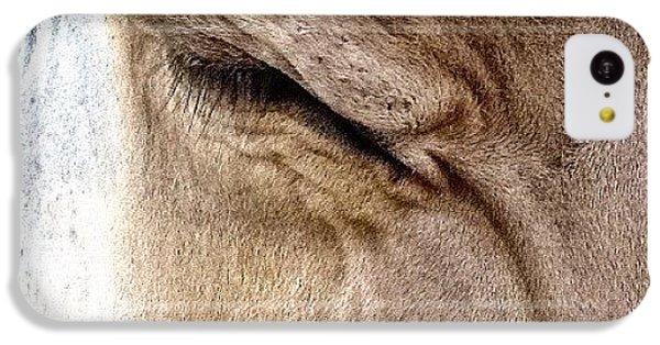 Ohio iPhone 5c Case - Brown Swiss Cow by Natasha Marco