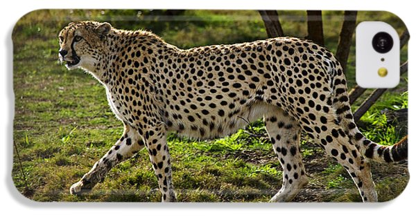 Cheetah  IPhone 5c Case by Garry Gay