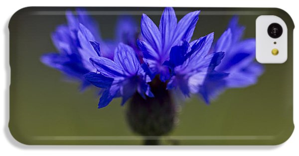 Cornflower Blue IPhone 5c Case by Clare Bambers