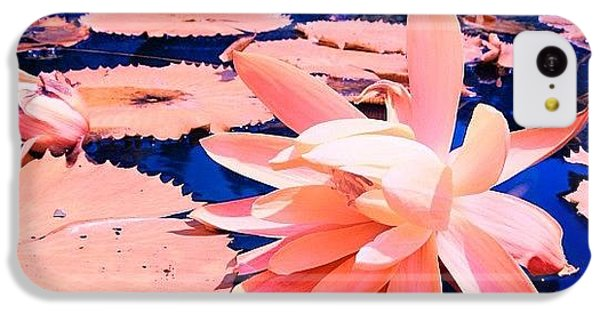 #flower #instahub #instagood #instamood IPhone 5c Case
