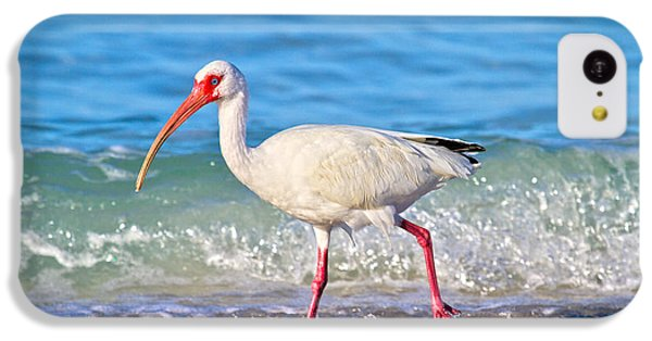 Ibis iPhone 5c Case - For The Birds by Betsy Knapp