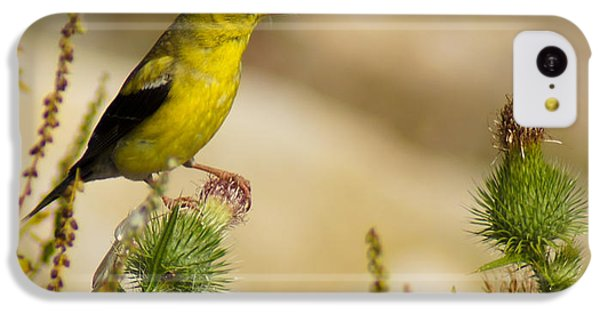 Goldfinch On Lookout IPhone 5c Case