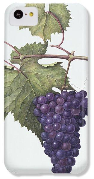 Grapes  IPhone 5c Case