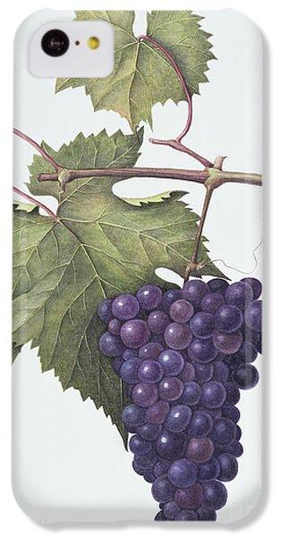 Grapes  IPhone 5c Case by Margaret Ann Eden