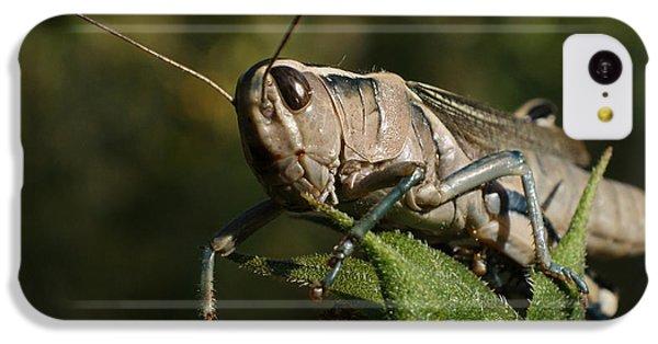 Grasshopper 2 IPhone 5c Case by Ernie Echols