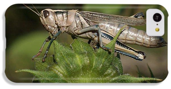 Grasshopper IPhone 5c Case by Ernie Echols