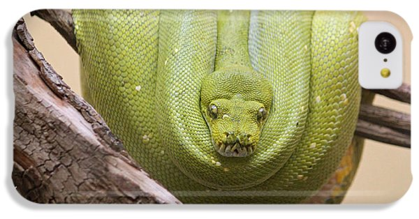 Green Tree Python IPhone 5c Case by Suzanne Gaff