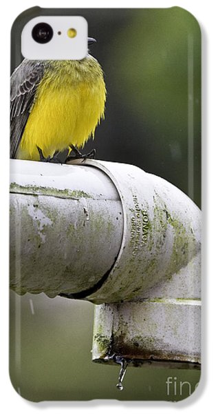 Grey-capped Flycatcher IPhone 5c Case by Heiko Koehrer-Wagner