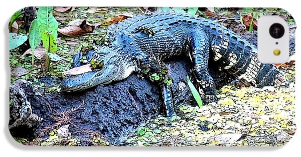 Hard Day In The Swamp - Digital Art IPhone 5c Case by Carol Groenen