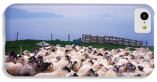 Sheep iPhone 5c Case - Herding Sheep, Inishtooskert, Blasket by The Irish Image Collection
