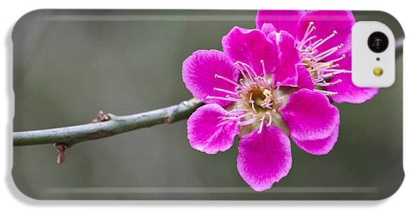 Japanese Flowering Apricot. IPhone 5c Case by Clare Bambers