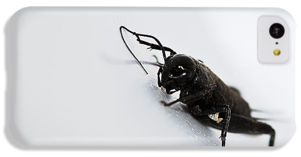 Cricket iPhone 5c Case - Jiminey Cricket by Susan Capuano