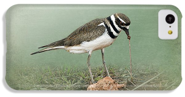 Killdeer iPhone 5c Case - Killdeer And Worm by Betty LaRue