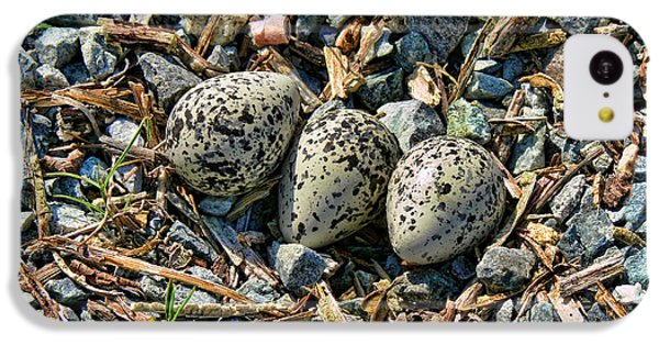 Killdeer iPhone 5c Case - Killdeer Bird Eggs by Jennie Marie Schell
