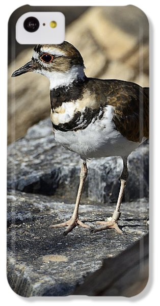 Killdeer iPhone 5c Case - Killdeer by Saija  Lehtonen