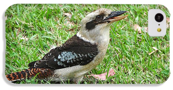Laughing Kookaburra IPhone 5c Case by Kaye Menner