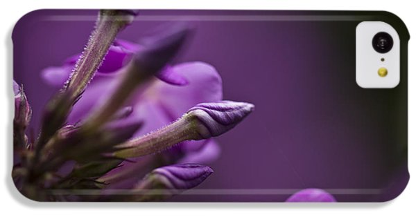 Lilac Spirals. IPhone 5c Case by Clare Bambers