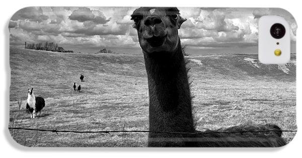 Llama iPhone 5c Case - Llama by Cale Best
