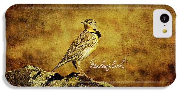 Meadowlark IPhone 5c Case by Lana Trussell
