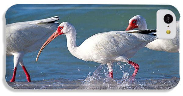 Ibis iPhone 5c Case - Morning Stroll by Betsy Knapp