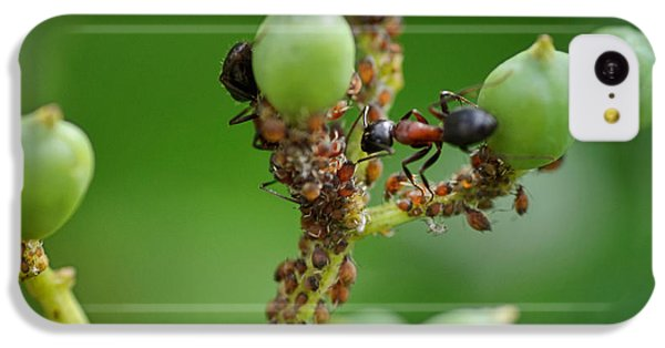 Ant iPhone 5c Case - Mutualistic by Susan Capuano
