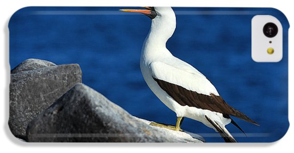 Nazca Booby IPhone 5c Case by Tony Beck