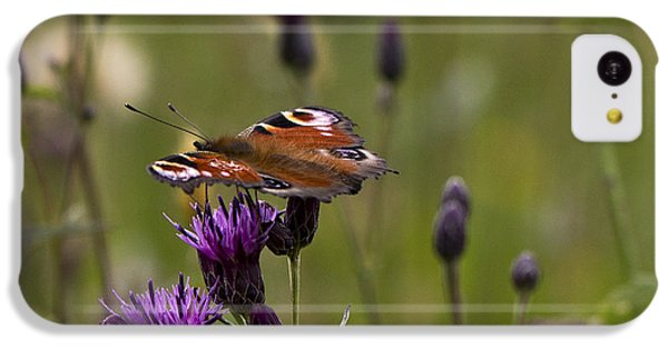 Peacock Butterfly On Knapweed IPhone 5c Case